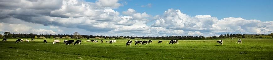 Trouwreportage Nationaal Park De Biesbosch